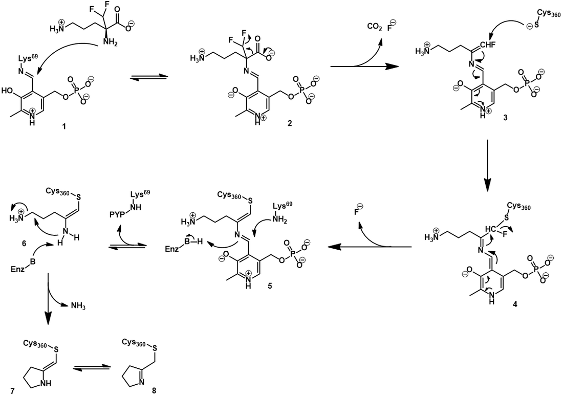 Eflornithine irreversible inhibition mechanism for ODC
