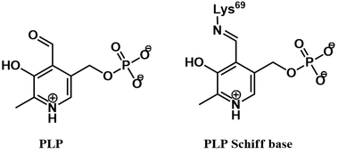 PLP and PLP Schiff base chemical structures